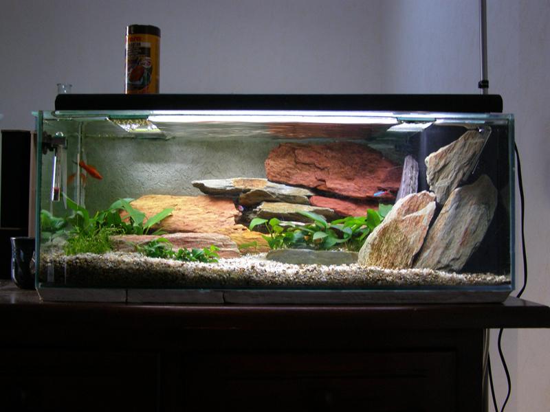 idée déco aquarium 50l